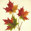 #4 FINAL Three Sugar Maple Leaves