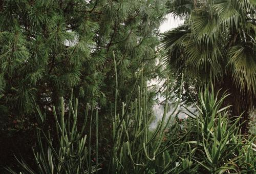 A close up of green pine trees