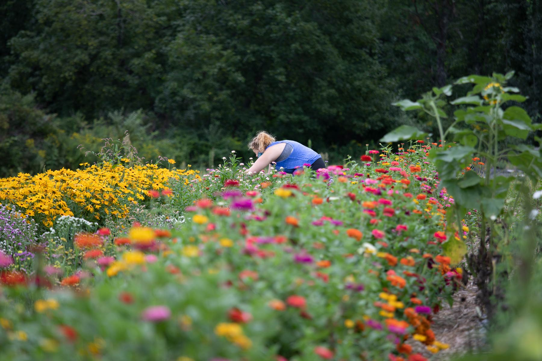 a student in a field of flowers on the book and plow farm