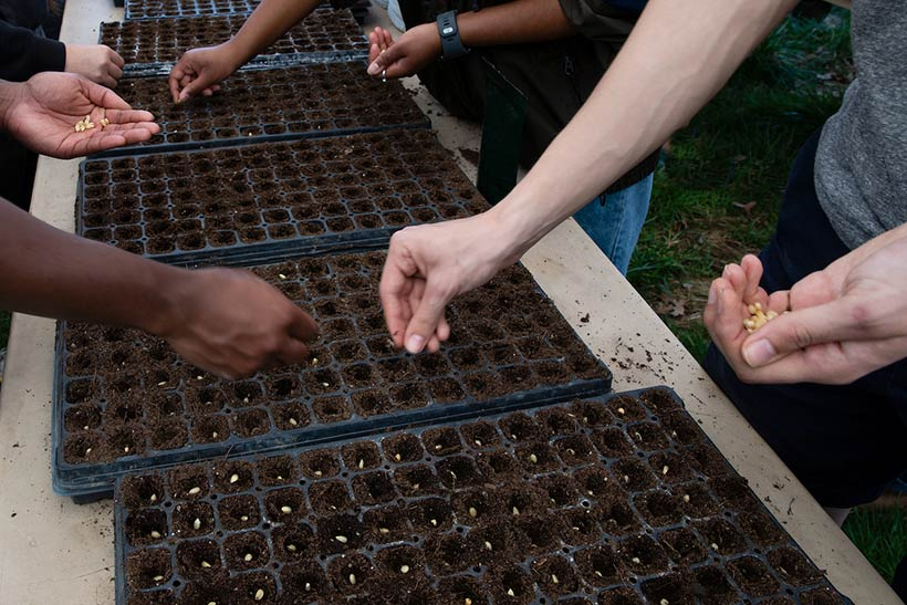 Close-up of hands planting seeds in flats