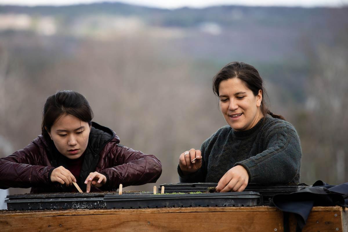 Student Julie Jim and Maida Ives potting flower seeds
