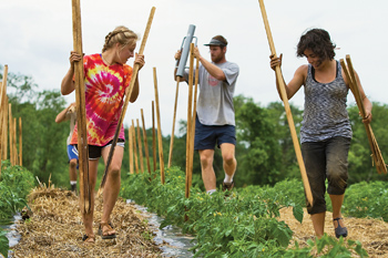 Students with tomato stakes at Book & Plow Farm
