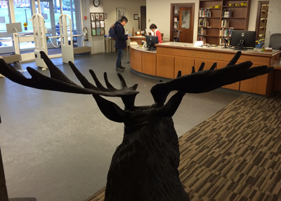 The moose in Frost Library
