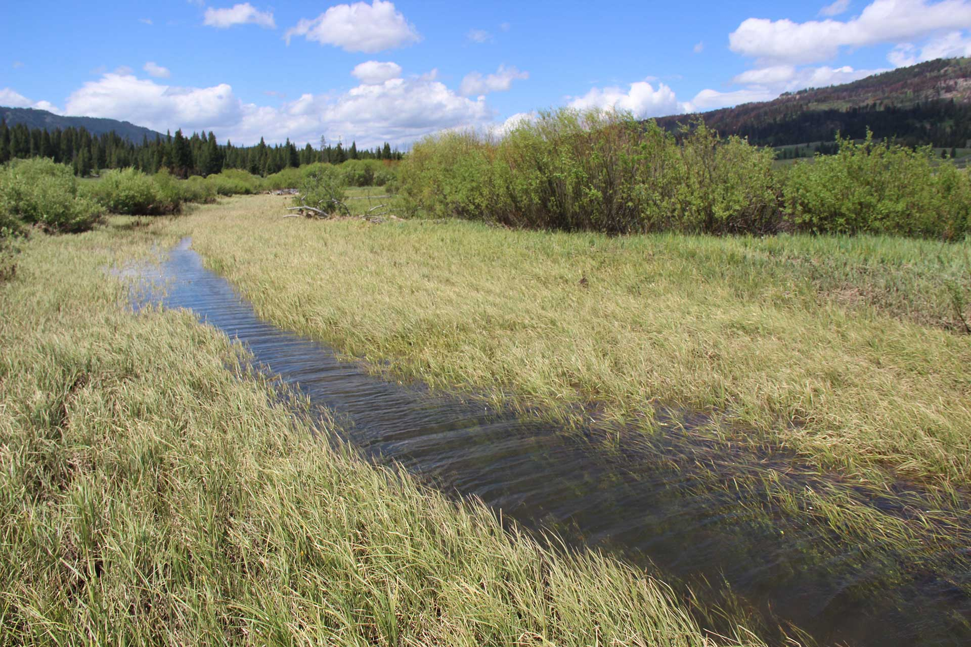 Pond near a beaver dam