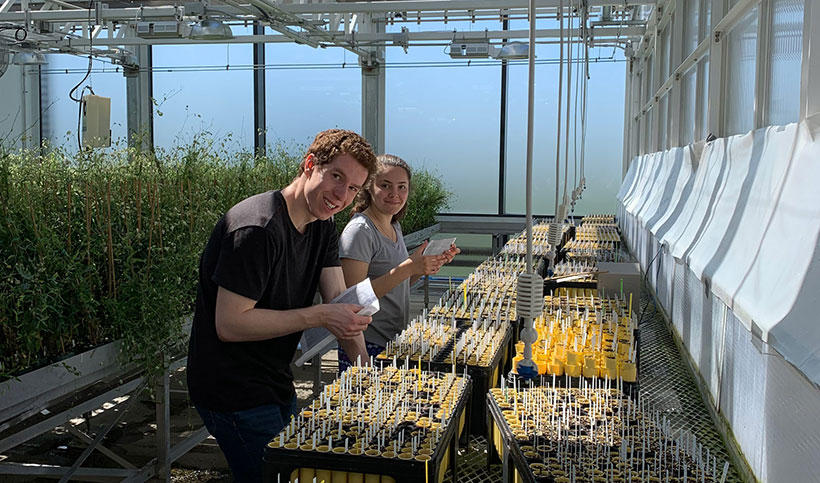 two students working in the greenhouse at amherst college