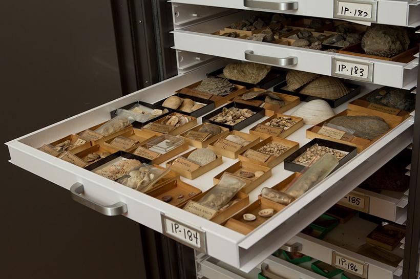Invertebrate Paleontology drawer