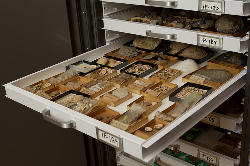 Invertebrate Paleontology drawer
