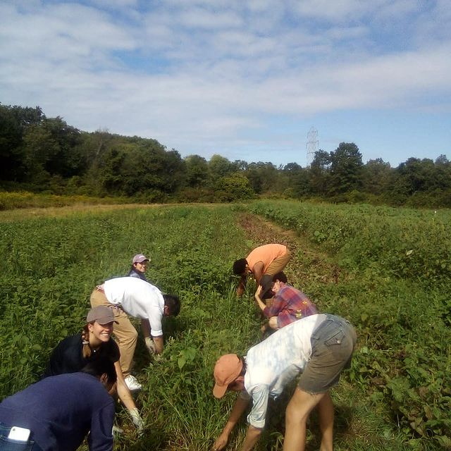 several people harvesting vegetables by hand on a farm