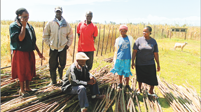 The Amani Seed Project
