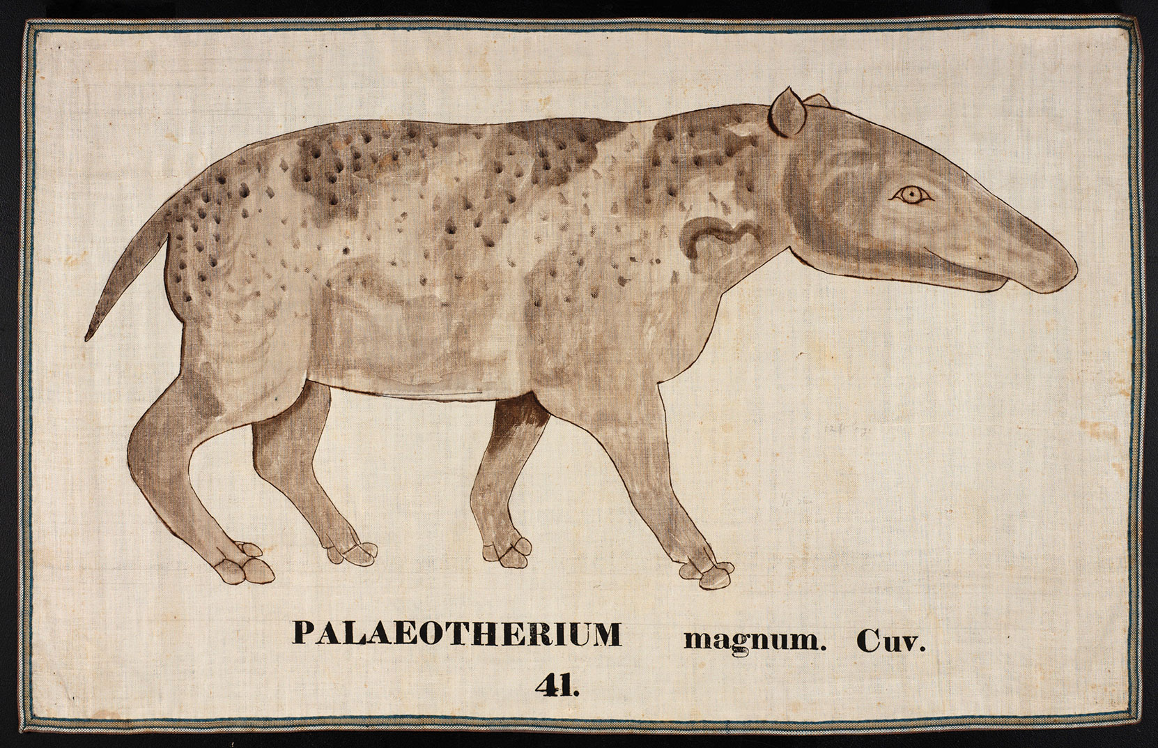 Palaeotherium by Ora White Hitchcock