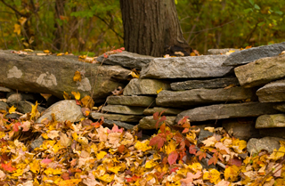 A stone wall in autumn