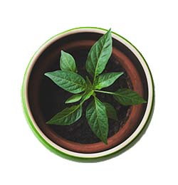 Image of potted plant