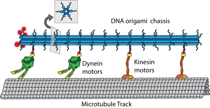 "Colorful research illustration showing the arrangement of a ""Microtubule Track,"" ""Dynein motors,"" ""Kinesin motors"" and a ""DNA origami chassis"""