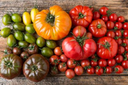 Photo of tomatoes of various sizes, shapes and colors on a wooden tabletop