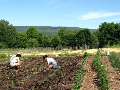 Photo of three students planting in a field at Book and Plow Farm