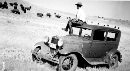 Black-and-white photo of a man sitting on the roof of an early-20th-century car, looking at a herd of bison in a field