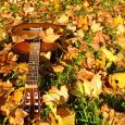 picture of a guitar on grass and fall leaves