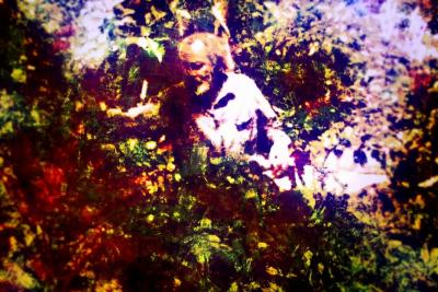 Milford graves photo