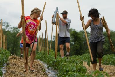 students plant stakes for growing vegetables on the college Book and Plow farm