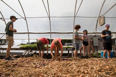 Book and Plow Farm workers harvesting in a greenhouse