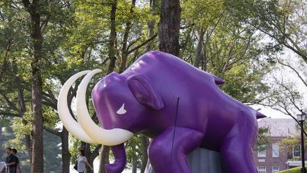 The Amherst Mammoth