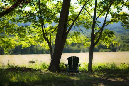 adirondack chair in a peaceful setting in the wildlife sanctuary