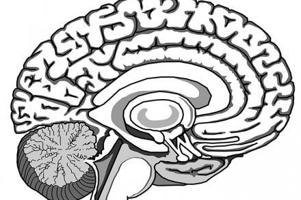 About the neuroscience program