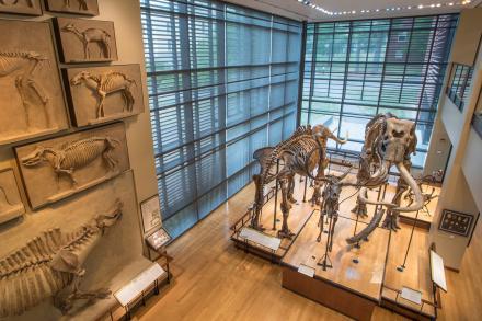 Beneski Museum of Natural History