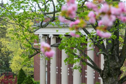 Pink spring blossoms in front of Converse Hall