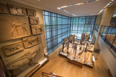 First floor exhibit of mammoth and mastodon skeletons