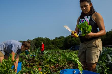 Students harvest vegetables on the Book and Plow Farm