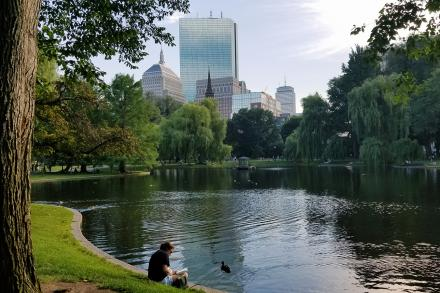 A lake in Boston Common with skyscrapers in the distance