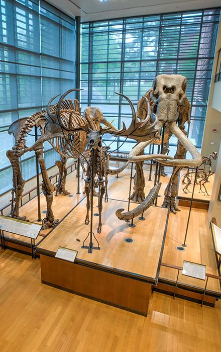 Inside the Beneski Museum of Natural History