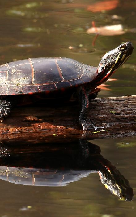 Turtle in the wildlife sanctuary