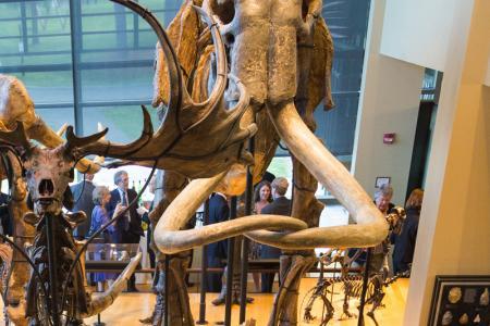 mammoth skeleton at the Beneski Museum
