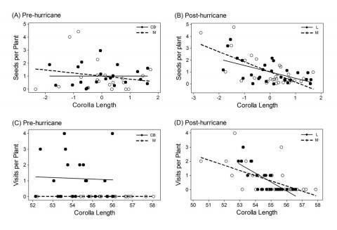Selection on corolla length