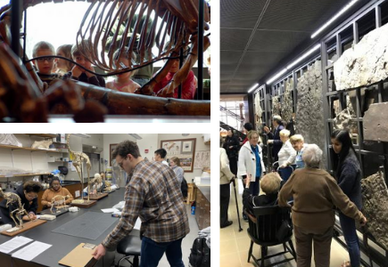 Collage of different visiting groups at the museum
