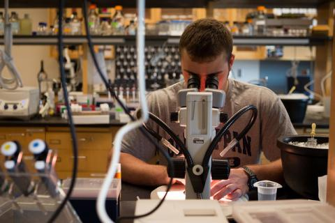 Pete Alsharif '15 in Ethan Graf's lab