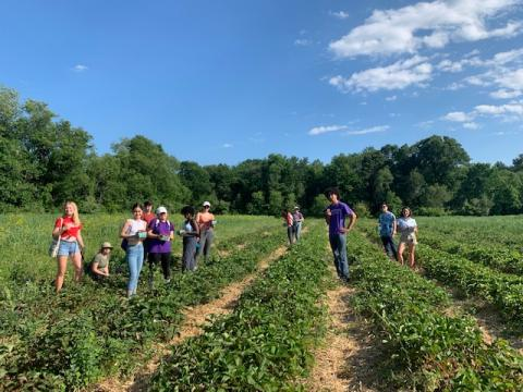 Strawberry Picking with Friends!