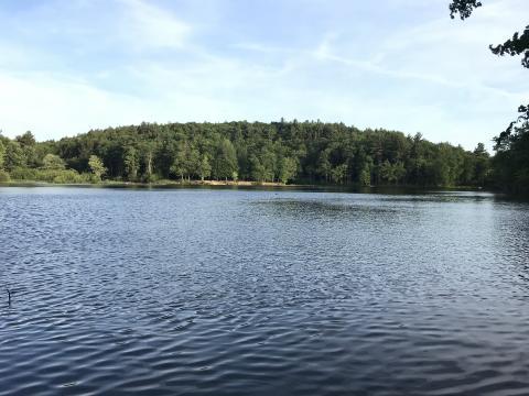 puffers pond