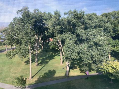 Summer view of First Year Quad from 4th Floor Stearns Dorm.