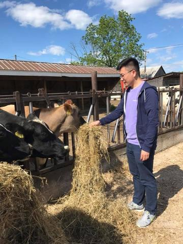 Admission Dean feeding a cow at Flayvors