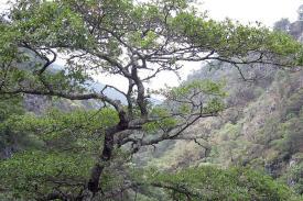 Flora in the Los Marmoles National Park, Hidalgo, Mexico.