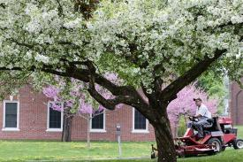 A staff member mowing the lawn on Amherst College campus
