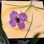 Flower fungus