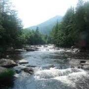 rocky river with view of evergreen trees and mountain in background