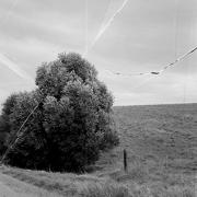 A black and white photo of a tree against an empty horizon