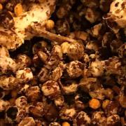 A close up of a group of mushroom spores