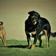 Floki and Zola